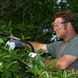 Tree Trimmer With Saw - Stock Photo