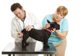 Mommas Doggy Gets a Shot — Stock Photo