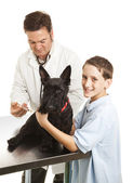 Vet Treats Boys Dog — Stock Photo
