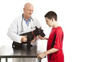 Veterinário cuida de cachorro de adolescentes — Foto Stock