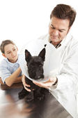 Perro tratamiento veterinario — Foto de Stock