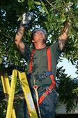 Tree Surgeon on Ladder — Stock Photo
