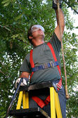 Tree Trimmer Safety Harness — Stock Photo