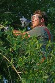 Workman Trimming Tree — Stock Photo