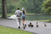 Trailing Duckies — Stock Photo