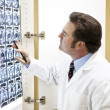 Stock Photo: Doctor Examines Cat Scan