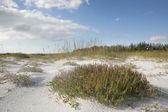 Beach Grass & Sky — Stock Photo
