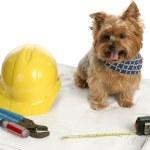 Canine Architect — Stock Photo