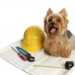 Construction Dog — Stock Photo