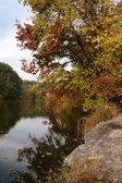 Autunno boschi creek con fogliame giallo alberi e rocce nella foresta — Foto Stock