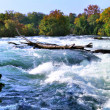 Mountain river rapids in autumn - Stock Photo