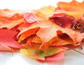 Folhas de outono coloridas — Fotografia Stock
