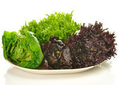 Fresh salad leaves assortment on a plate — Stock Photo