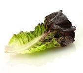 Red lettuce leaf — Stock Photo