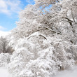 Trees after ice storm — Stock Photo