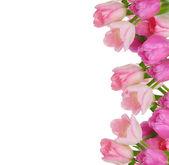 Tulipany ramki — Zdjęcie stockowe