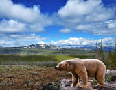 Mountain landscape with bear — Stock Photo