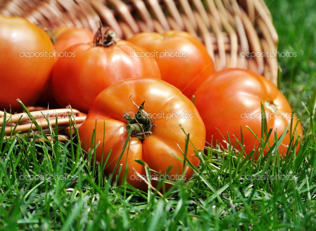 Fresh organic tomatoes  in a basket on a grass  — Stock Photo #6822240