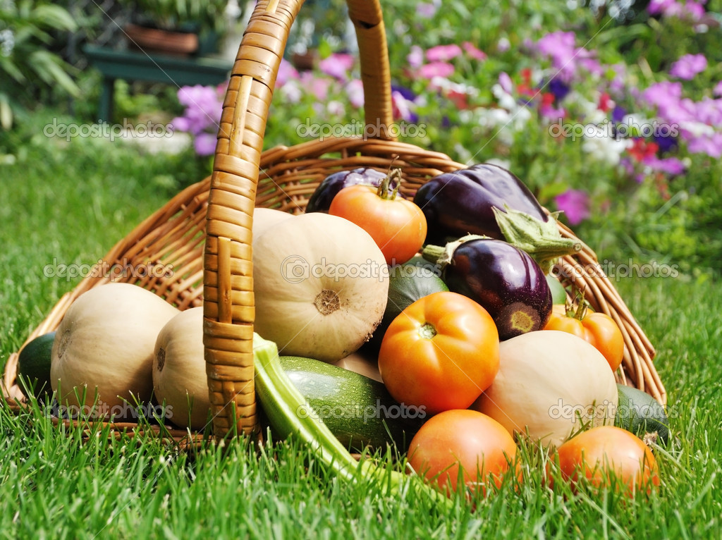 Fresh organicvegetables in a basket on a grass  Stock Photo #6822374