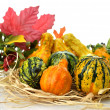 Gourds — Stock Photo #6923504