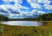 Pequeño lago en el bosque — Foto de Stock