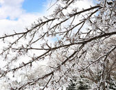 Ice On The Tree Branches — Stock Photo