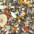 Bird food background — Stock Photo
