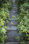 Wooden stairs — Stock Photo
