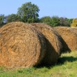 Rolling haystacks — Stock Photo