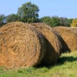 Rolling haystacks — Stock Photo