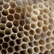 Stock Photo: Close up view of empty wasp nest