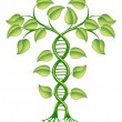 DNA plant concept — Stock Vector