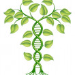 Stock Vector: DNA plant concept