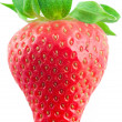 Beautiful strawberry — Foto Stock
