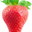Beautiful strawberry — Stock Photo