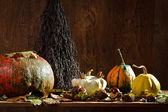 Autumn decoration on old shelf in vintage cellar — Stock Photo