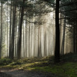 Foothpath in foggy misty forest — Stock Photo #7022702