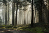 Foothpath in the foggy misty forest — Stock Photo
