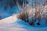 Frosen grass in winter at sunrise — Stock Photo