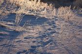 Frosen meadow in winter at sunrise — Stock Photo