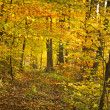 Golden footpath in the forest at autumn — Stock Photo