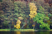 Forest in autumn over the lake — Stock Photo