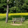 Stock Photo: Bench waiting for you
