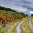 Country road in fall — Stockfoto #6814467
