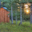 Sunset through spruce trees near the outhouse — 图库照片