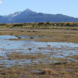 Wetlands near the Kachemak Bay — Stock Photo