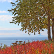Birch tree at the overlook in fall — Stock Photo