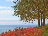 Birch tree at the overlook in fall — Stock fotografie