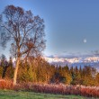 Full moon the birch tree — Stock Photo