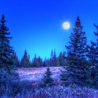 Moonlight in a spruce forest — Stock Photo